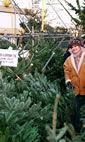 Christmas Trees: The Christmas Forest, Putney hotels title=